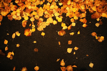fall wet leaves background / autumn background, yellow leaves fallen from the trees, fall of the leaves, autumn park