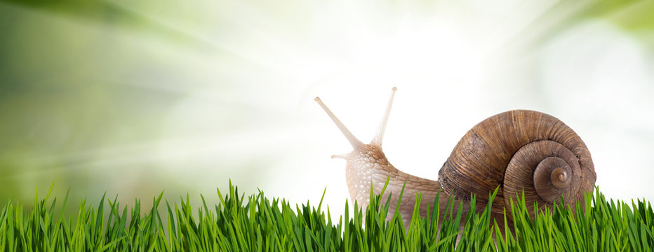 image of a snail on the grass in the park closeup