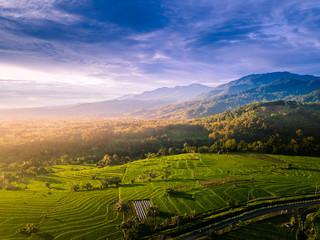 amazing paddy fields in bengkulu north of bengkulu province on sumatra island indonesia asia, where mountain ranges are in the kemumu