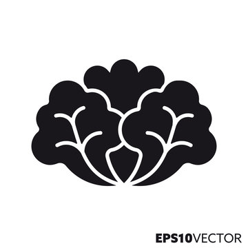 Lettuce vegetable vector glyph icon