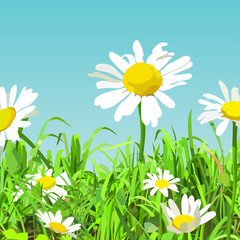 summer background of cartoon green glade with daisy flowers