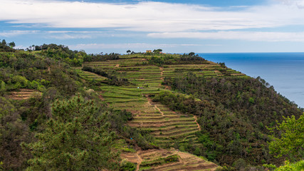 Beautiful terraced hills used by the Italian villagers for cultivating grape vine. Cinque Terre National Park landscape in Italy.