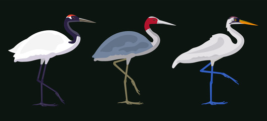 isolated vector image of a crane, large river bird, national fauna. flat cartoon illustration. realistic proportions.