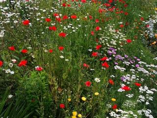 Wild flowers meadow or garden