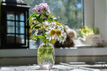 still life of chamomile and wildflowers in a small glass vase on the table in the sun from the window, against the kitchen countertop