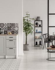 Elegant kitchen and dining room interior with black and white design and plant in concrete pot