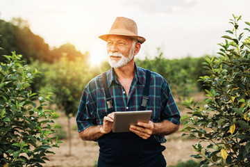 Sixty years old beard agronomist inspecting trees in orchard and using tablet computer. Wall mural