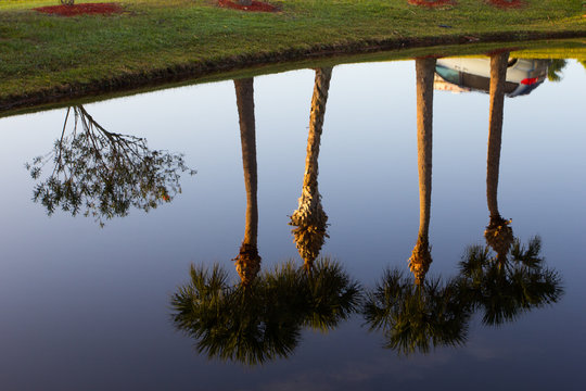 Palmetto Reflections in Water, Port St. Lucie, Florida