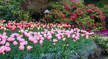 Aluminium Prints Tulip Fresh Springtime Tulips.