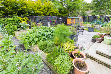 Garden with vegetable beds growing fresh produce