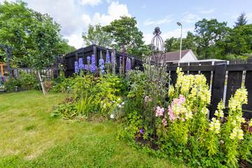 Perennial plants in a cottage garden border