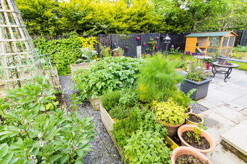 Garden with small lawn and vegetable beds growing fresh produce