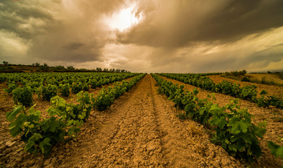 Wall Murals Vineyard Long exposure Panoramic view of a vineyard during a spring stormy day and clouds on the sky - Image