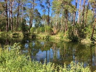 Fototapeta wielki kanał brdy brda rzeka brda rzeka kanał woda rytel czersk tuchola