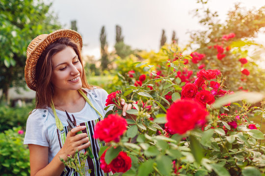 Young woman gathering flowers in garden. Girl smelling and cutting roses off. Gardening concept
