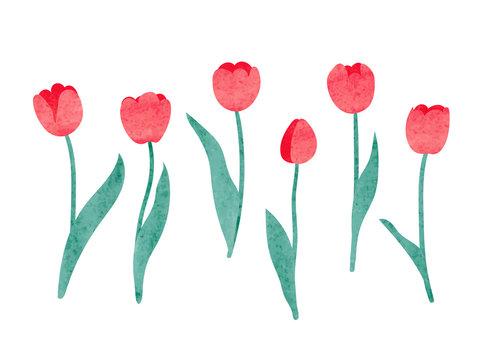 Set of watercolor tulip. Vector illustration.