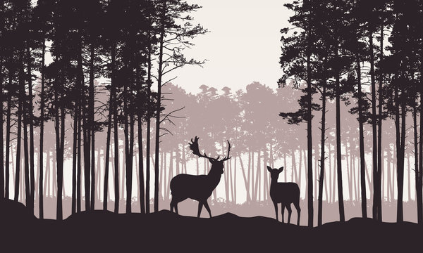 Realistic illustration of landscape with coniferous forest and morning retro sky. Deer and doe with antlers standing. Suitable as advertising for hunting or nature, vector