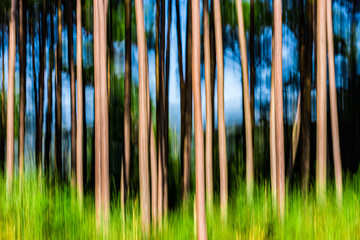 abstract forest - 275103865