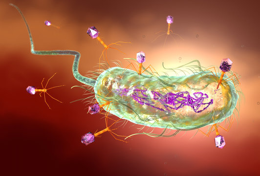 Bacteriophage attacking E. coli bacteria and injecting DNA. Medically accurate 3D illustration