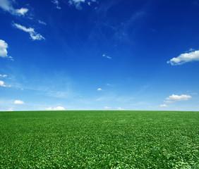 Fototapete - green field and blue sky