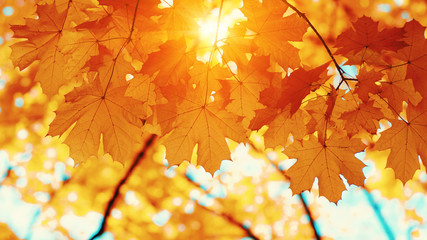 Autumn leaves on blurred nature background.