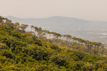 Sensational row of trees on the mountainside in the district of Claremont, Cape Town, South Africa.
