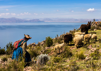 shepherdess with a small herd of sheep and a donkey on the shores of lake titicaca