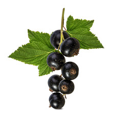 Fresh black-currants isolated on white background with clipping path