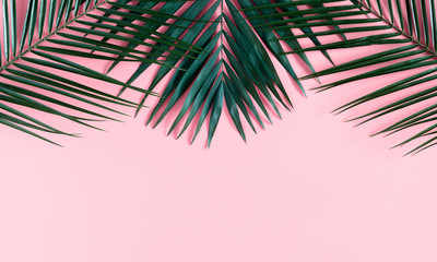 Photo sur Plexiglas Palmier Summer modern composition. Tropical green leaves of palm tree on pastel pink background. Flat lay, top view, copy space