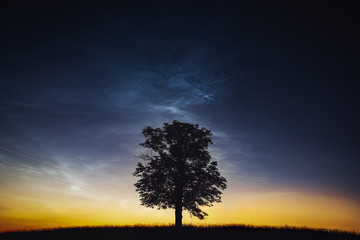 Noctilucent clouds and the silhouette of the tree.