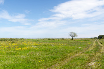 Bright green and yellow grassland with a lone tree