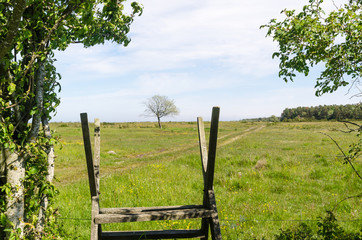 Wooden stile by a green and bright pastureland by spring season