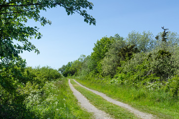 Winding dirt road through a colorful green meadow by spring season