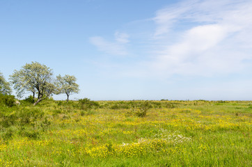 Green wide open grassland filled with yellow flowers by springtime