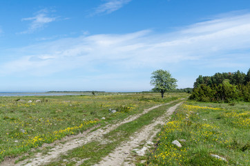 Beautiful dirt road through a green grassland with lots of yellow flowers
