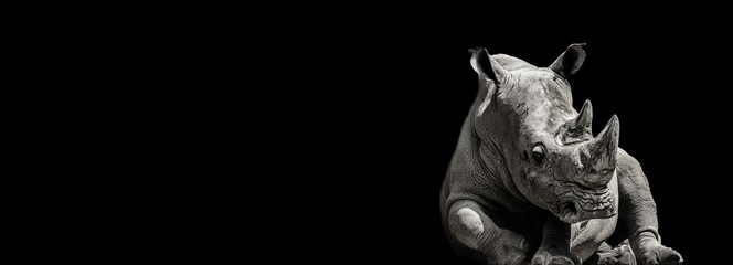 Monochrome lying rhinocero Wall mural