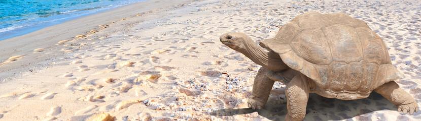 Tortue géante sur plage