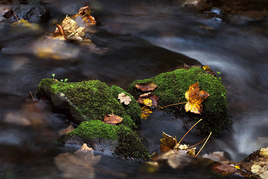 river moss rocks