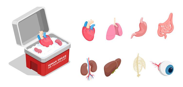 Human Organs Isometric Set