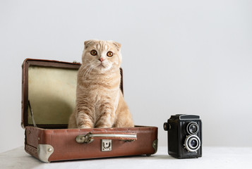 Summer holidays, vacation and travel concept. Cat in the vintage suitcase or luggage bag with camera on white background, copy space. Hotel for animals concept