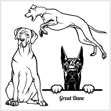 Great Dane - vector illustration for t-shirt, logo and template badges