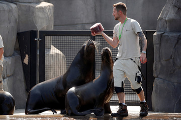 Caretakers prepares to throw ice to sea lions at the Paris Zoological Park in the Bois de Vincennes in the east of Paris, as a heatwave hits much of the country