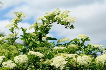 Search Photos Plante Medicinale