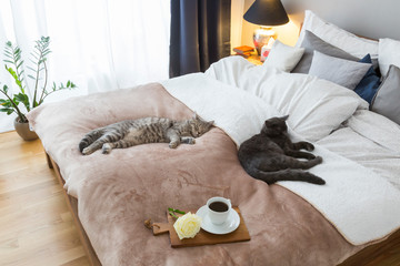 Two cats in bed with coffee and flower