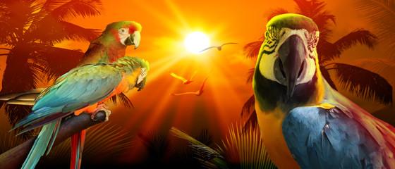 Photo sur Plexiglas Perroquets Papagei im Urlaub am Strand