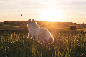 Dog chasing a stick