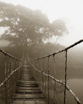 Fog surrounding trees and footbridge