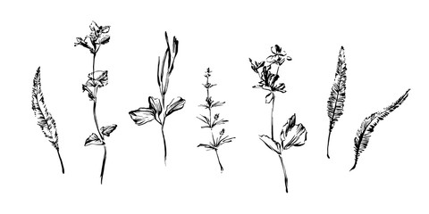 Set of hand drawn brush paint weed plants. Grunge style abstract elements for design painted by ink. Black isolated herbs and flowers vector on white background