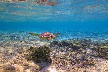 海亀と波照間ブルー・水中写真