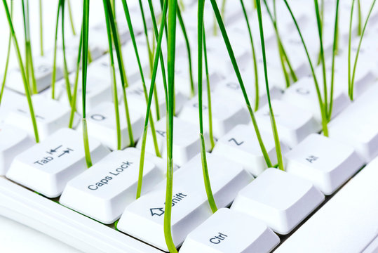 White keyboard with sprouts growing from it on white wooden background